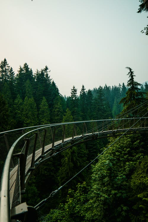 Scenery of narrow curvy suspension footbridge above green abundant trees in woodland on sunny day