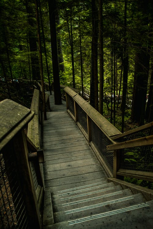 Wooden pathway in lush thick forest