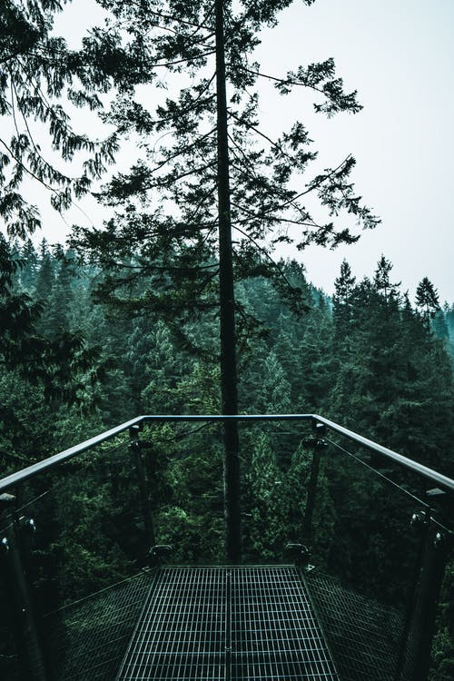 Tall footbridge with grid railings and floor over abundant thick forest on clear weather