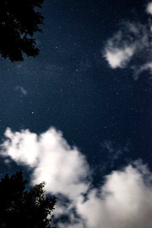 Starry night sky above trees silhouettes