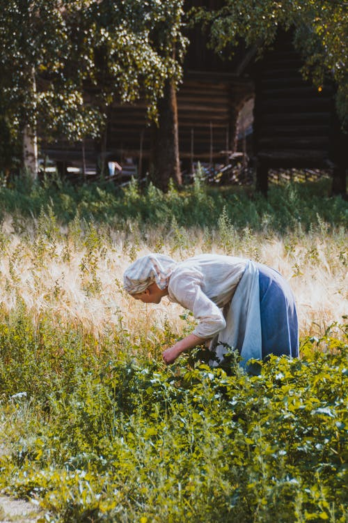 Side view of faceless female farmer in kerchief picking ripe plant in garden against wooden house