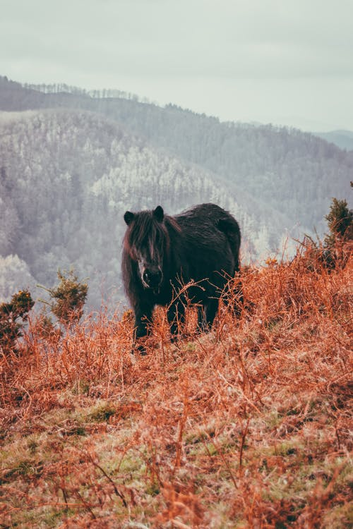 Adorable fluffy pony standing on grassy slope in mountainous terrain in autumn day