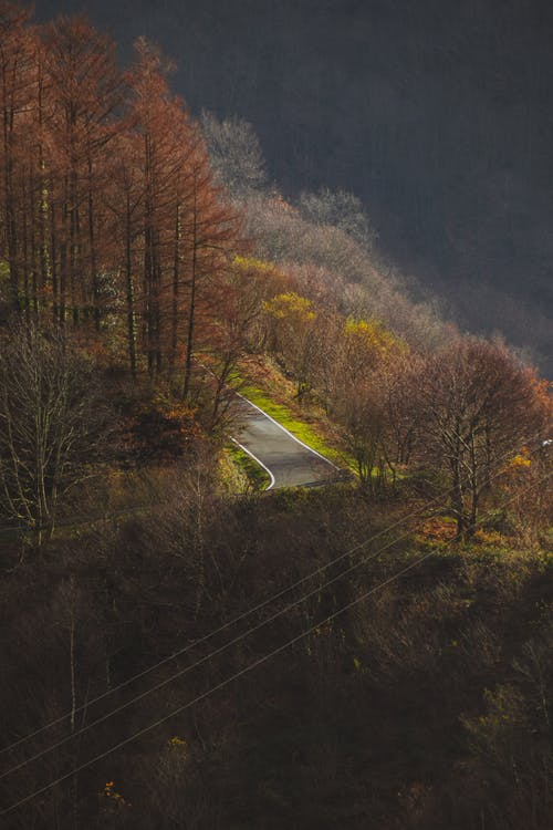 Empty asphalt curve route between leafless trees in fall day in mountainous terrain