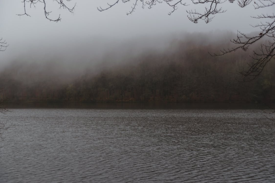 Forest near wide river in autumn fog