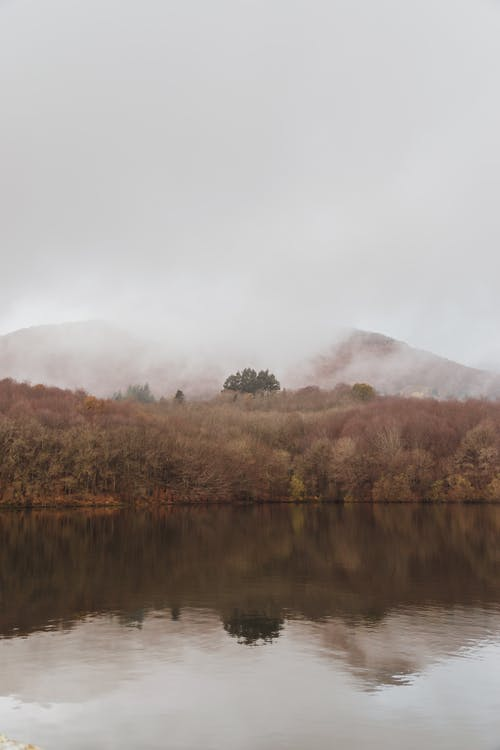 River and forest in foggy autumn day