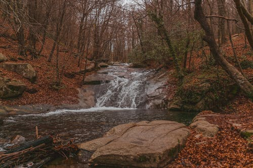 Narrow creek flowing among boulders in autumn forest with fallen leaves and trees