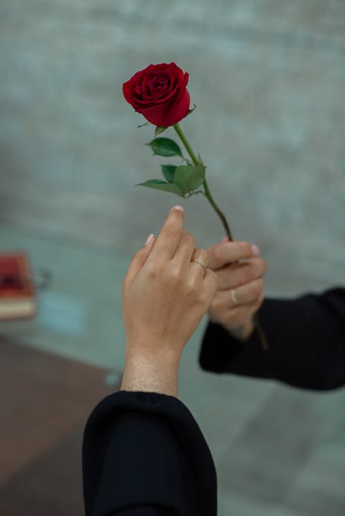 Crop unrecognizable male in black clothes presenting tender red rose to girlfriend on street