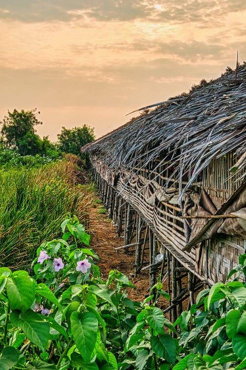 Weathered hut with wooden branches located near green plants and blooming flowers against cloudy sky in suburb terrain in countryside