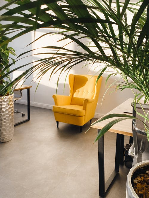Potted green plants placed near modern wooden tables and cozy yellow armchair located near white wall in sunlight