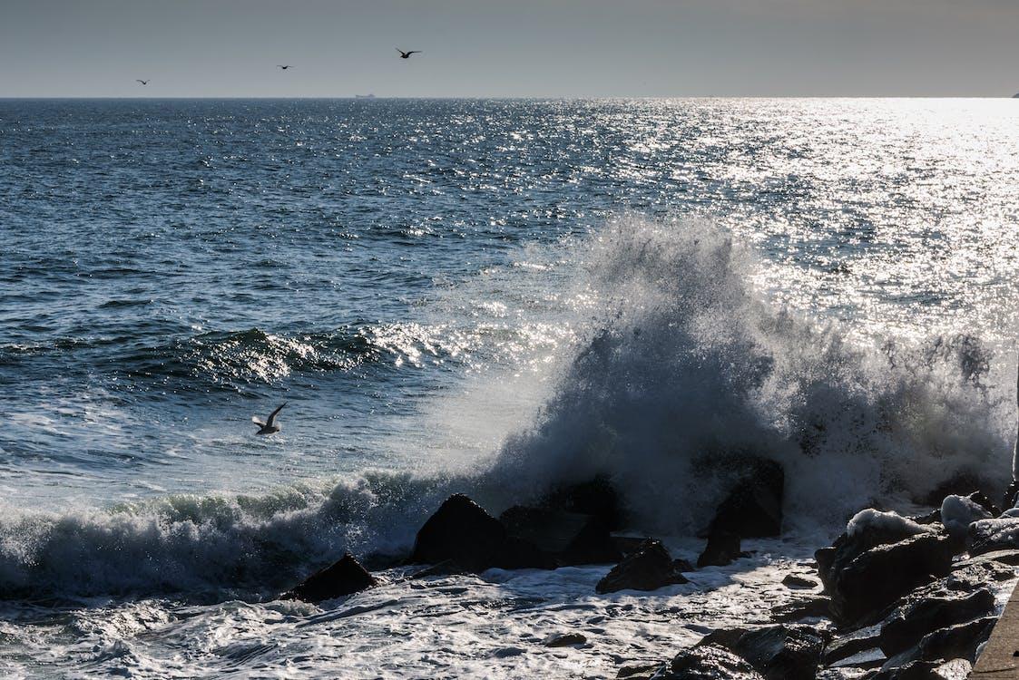 Free stock photo of wave crashing