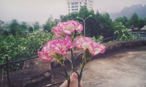 Foto d'estoc gratuïta de flors boniques, natura