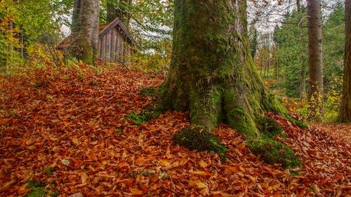 Δωρεάν στοκ φωτογραφιών με βρύο, δασικός, δάσος, δασώδης