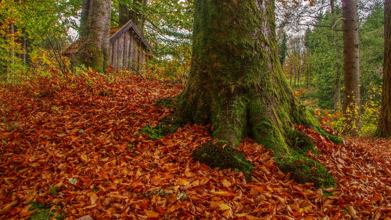 Free stock photo of foliage, forest, moss