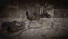 shoes, chicken, motocycle