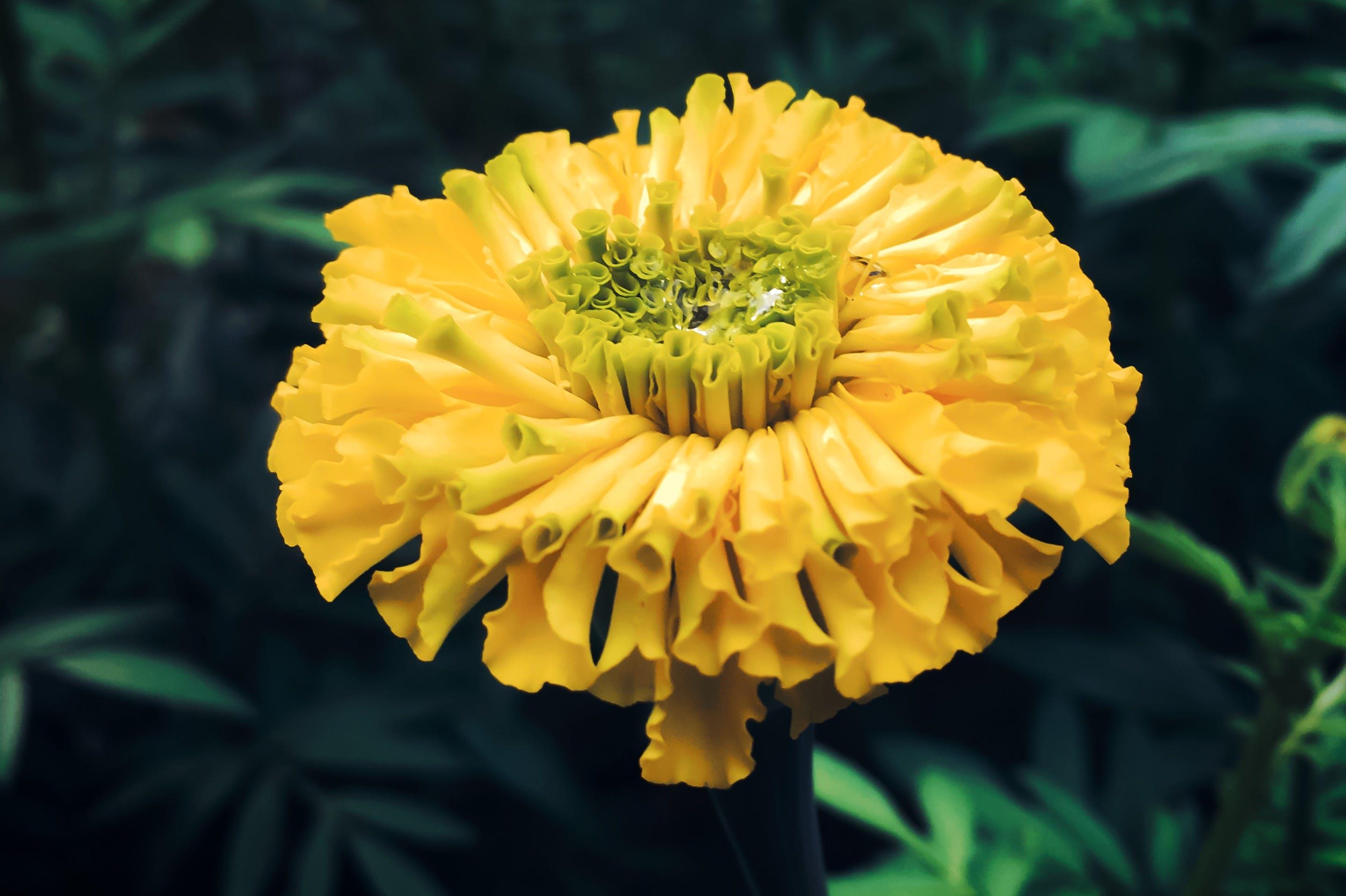 Δωρεάν στοκ φωτογραφιών με κίτρινη, λουλουδιασμένος, όμορφα λουλούδια