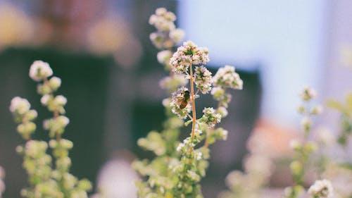 チルトシフトレンズの白い花