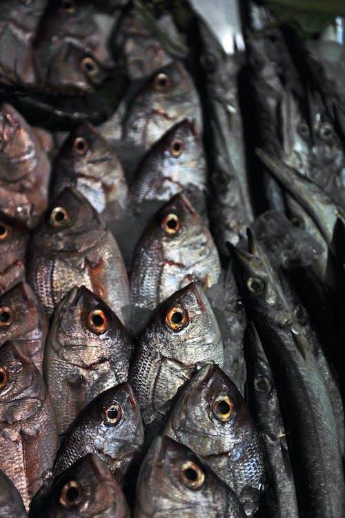 Gratis lagerfoto af fisk, frisk fisk, gribe, hav mad