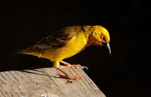 Gratis lagerfoto af finsch, siddende, vild fugl