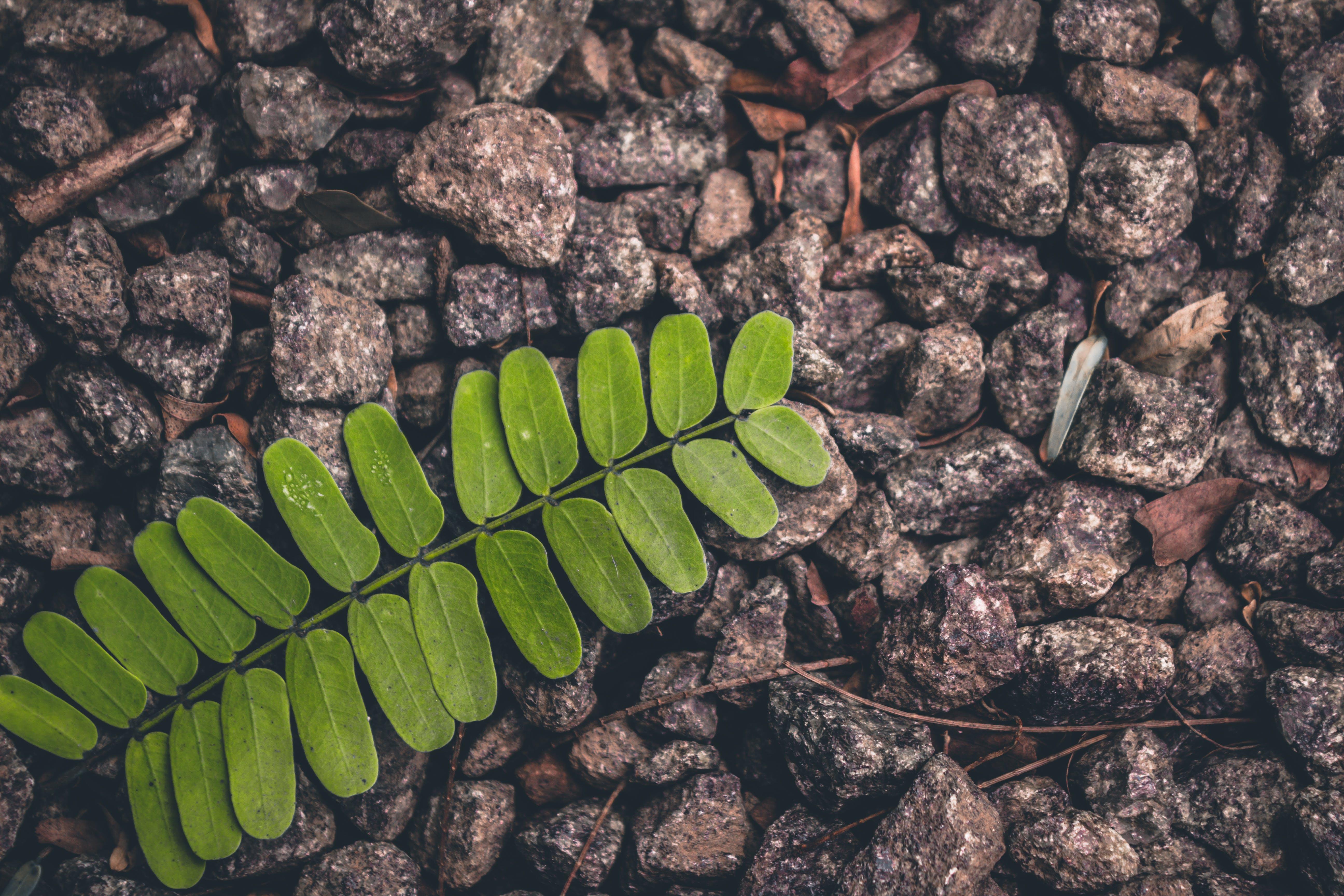 Green Fern Plant on Gray Stone Lot