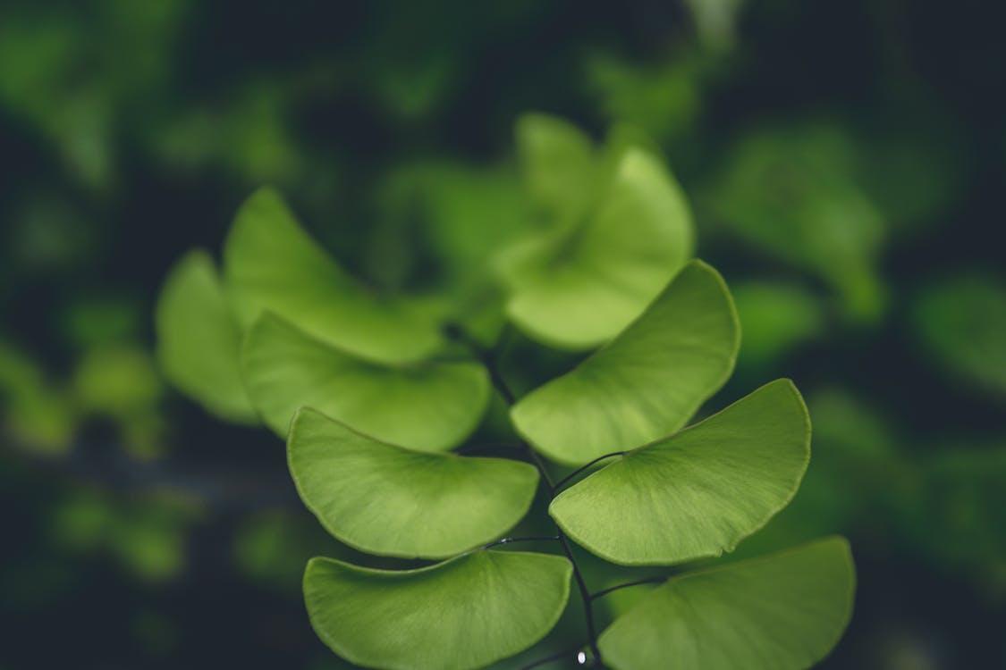 botanický, čerstvosť, čerstvý
