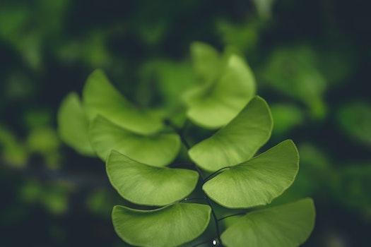 Free stock photo of nature, garden, plant, blur