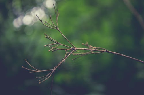 Free stock photo of background, branch, brown