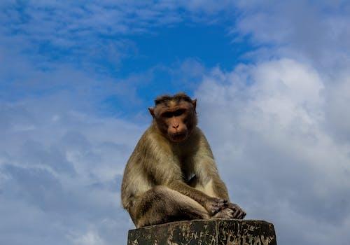 Free stock photo of animal, animal background, ape