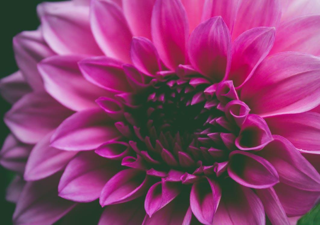 абстрактний, барвистий, ботанічний