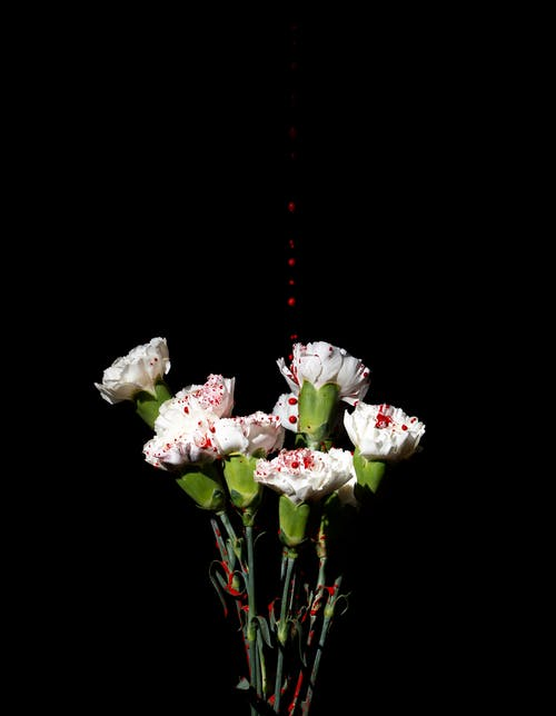White and Pink Flowers on Black Background