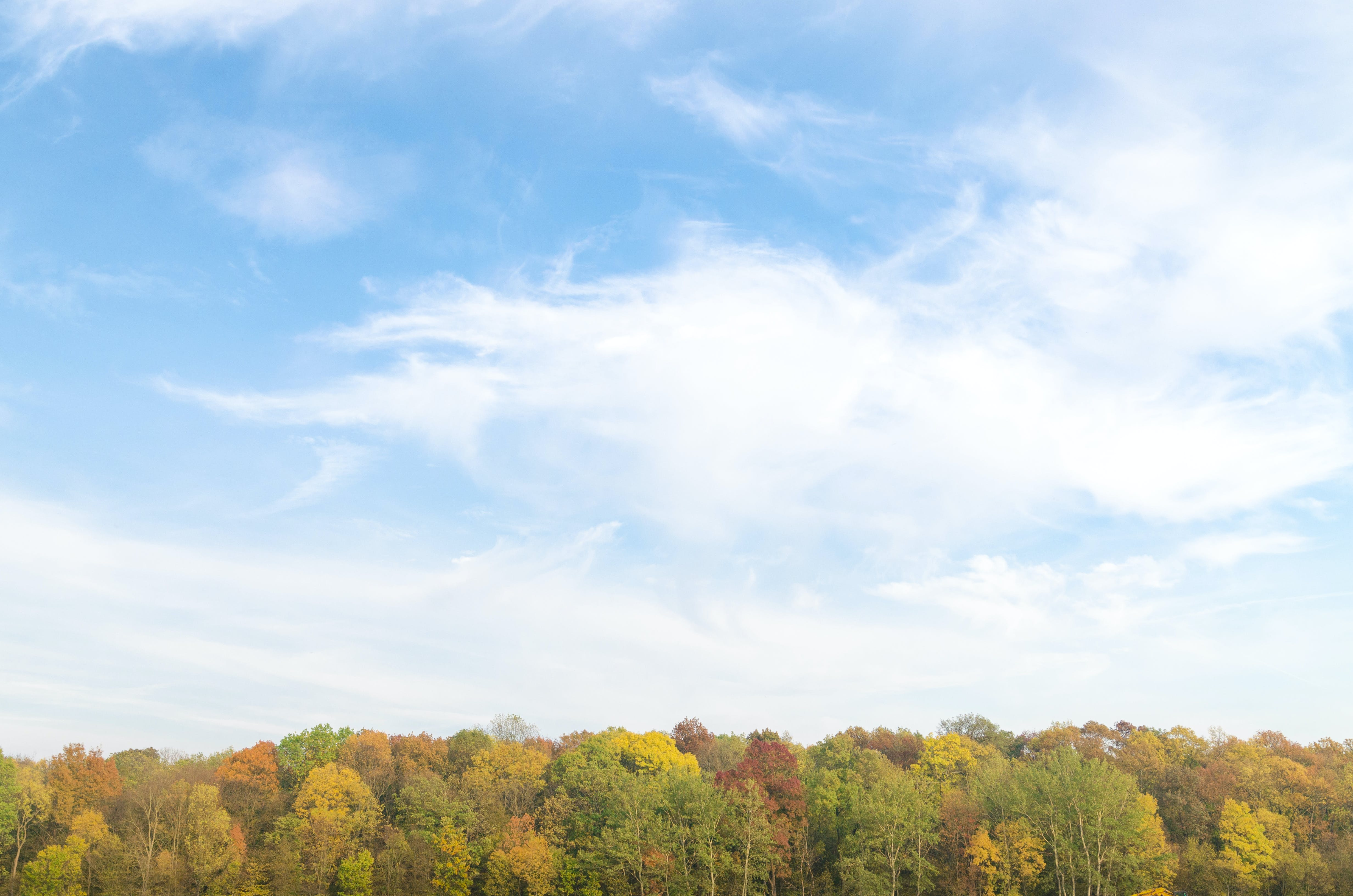 Panoramic Photography of Sky and Forest