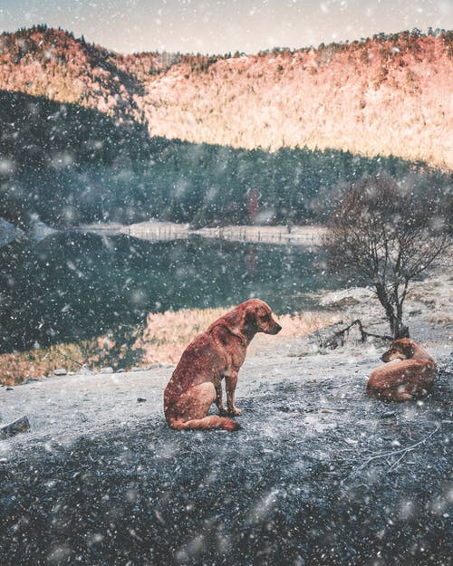 Free stock photo of animal, autumn, background