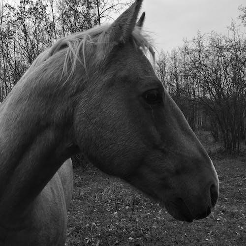 動物, 動物攝影, 可愛的動物, 抽象照片 的 免費圖庫相片