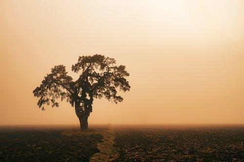 Бесплатное стоковое фото с вечер, дерево, дымка