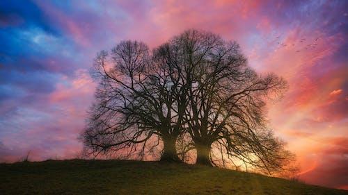 Бесплатное стоковое фото с вечер, дерево, за городом