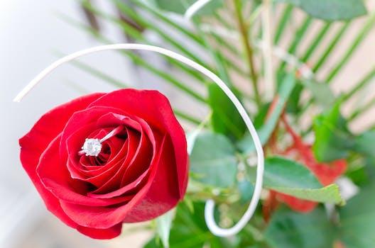 Free stock photo of red, love, romantic, garden