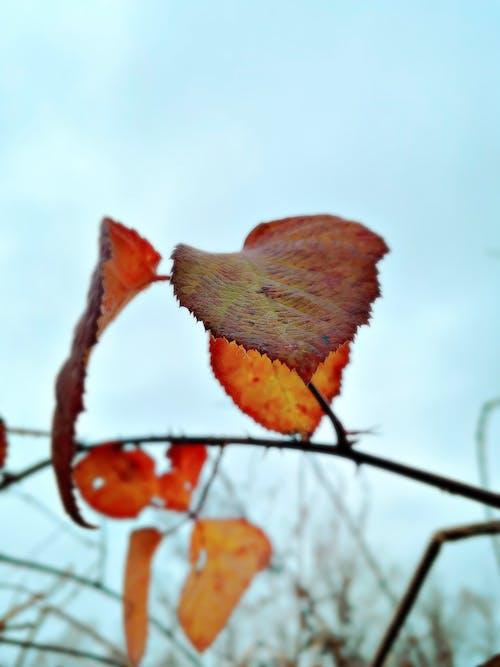 Free stock photo of autumn color, autumn leaf, color
