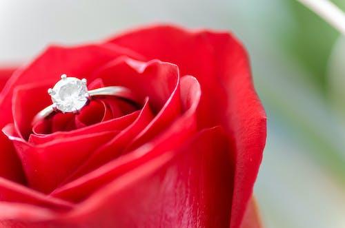 꽃잎, 낭만적인, 다이아몬드, 다이아몬드 반지의 무료 스톡 사진