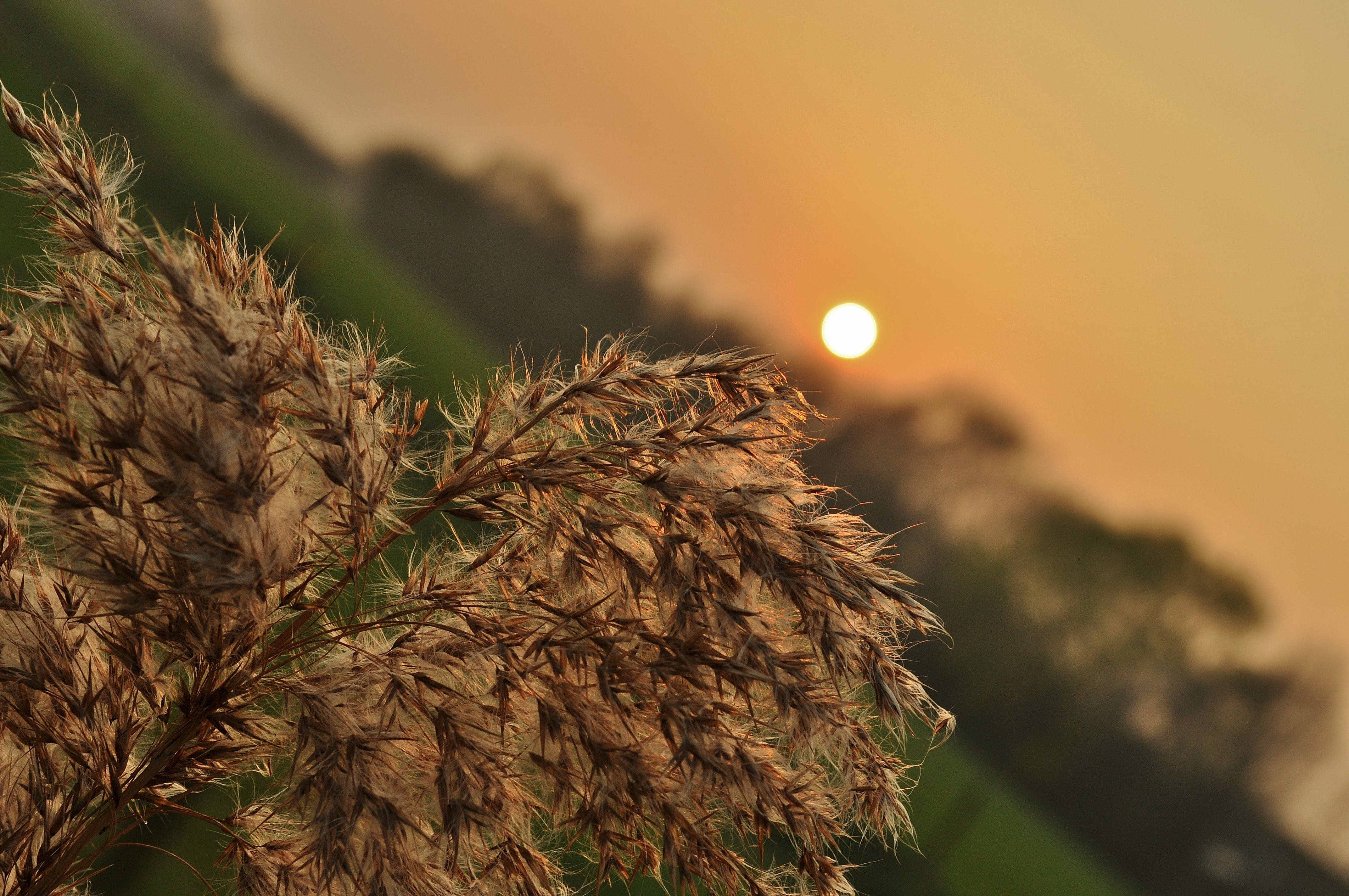 agriculture, cereals, dawn