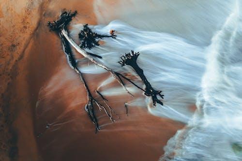 Top view of foamy wavy sea water washing orange sandy coast with broken trees