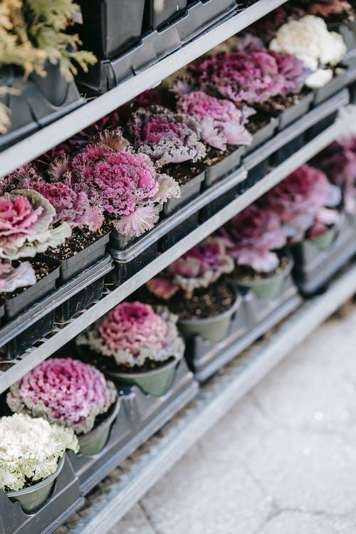 Rosa Blumen Auf Grauem Stahlgestell