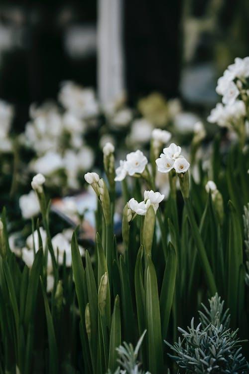 Blooming iris flowers in lush garden