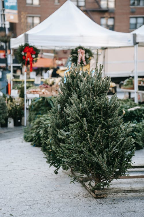 Lush firs placed on paved sidewalk in green market