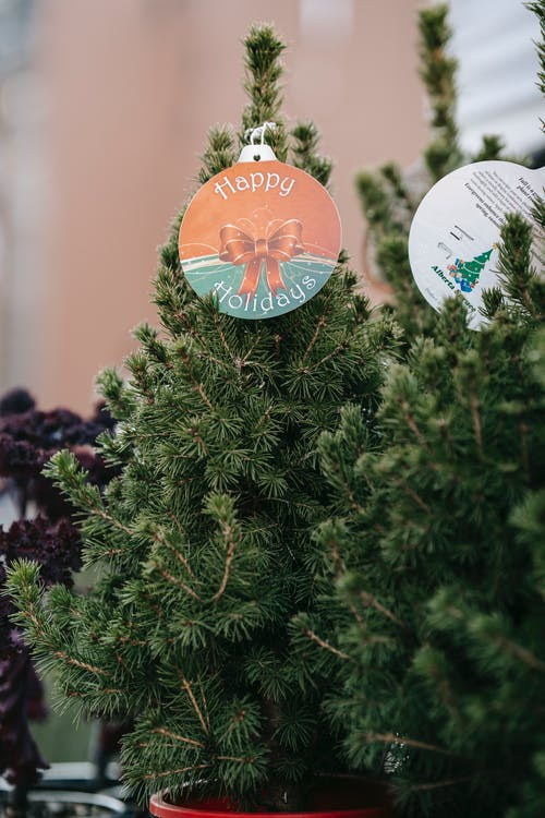 Decorative lush small firs in pots decorated with cards with inscription Happy Holidays and placed on stall in bazaar