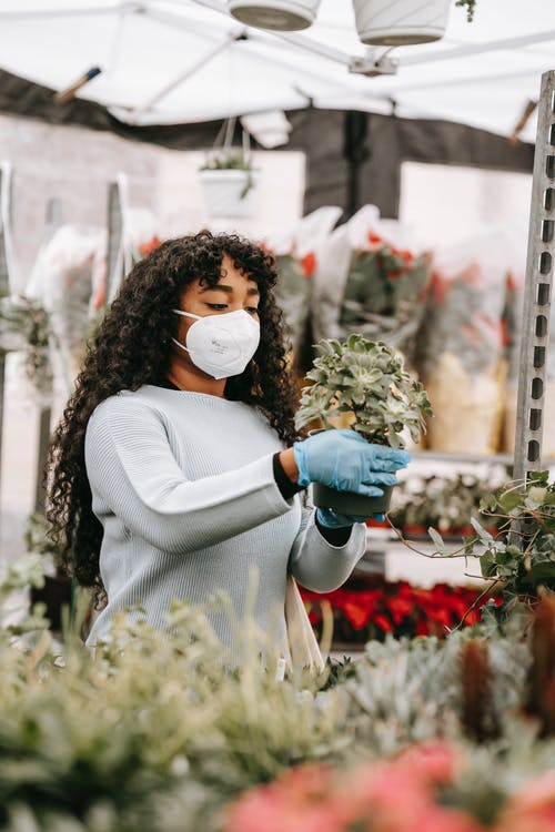 Unemotional African American female in blue sweater respirator and gloves picking verdant potted succulent in street bazaar