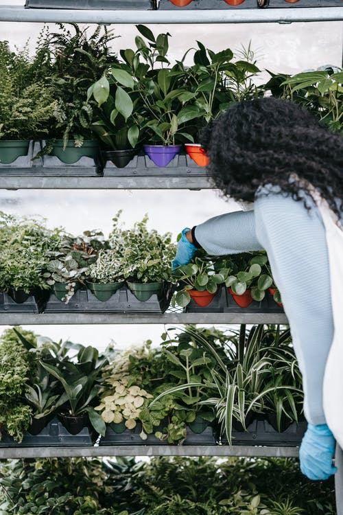 Mujer En Camisa Blanca De Manga Larga Y Pantalones Vaqueros Azules De Pie Cerca De Plantas Verdes