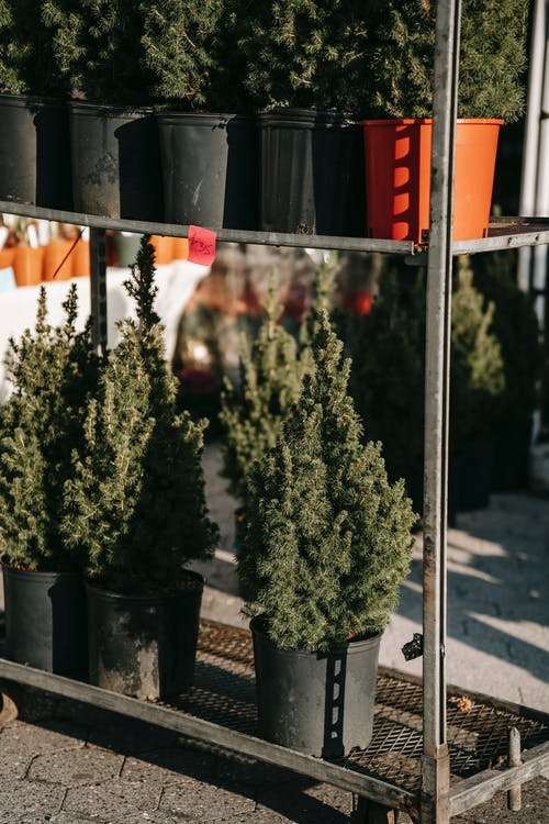 Зеленое растение на черном горшке