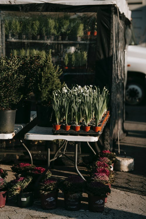 Potted plants selling on street in sunny day
