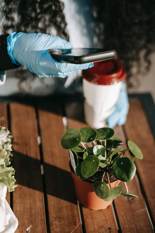 High angle of crop faceless woman in protective gloves taking photo of green plant in small pot on wooden table with coffee cup