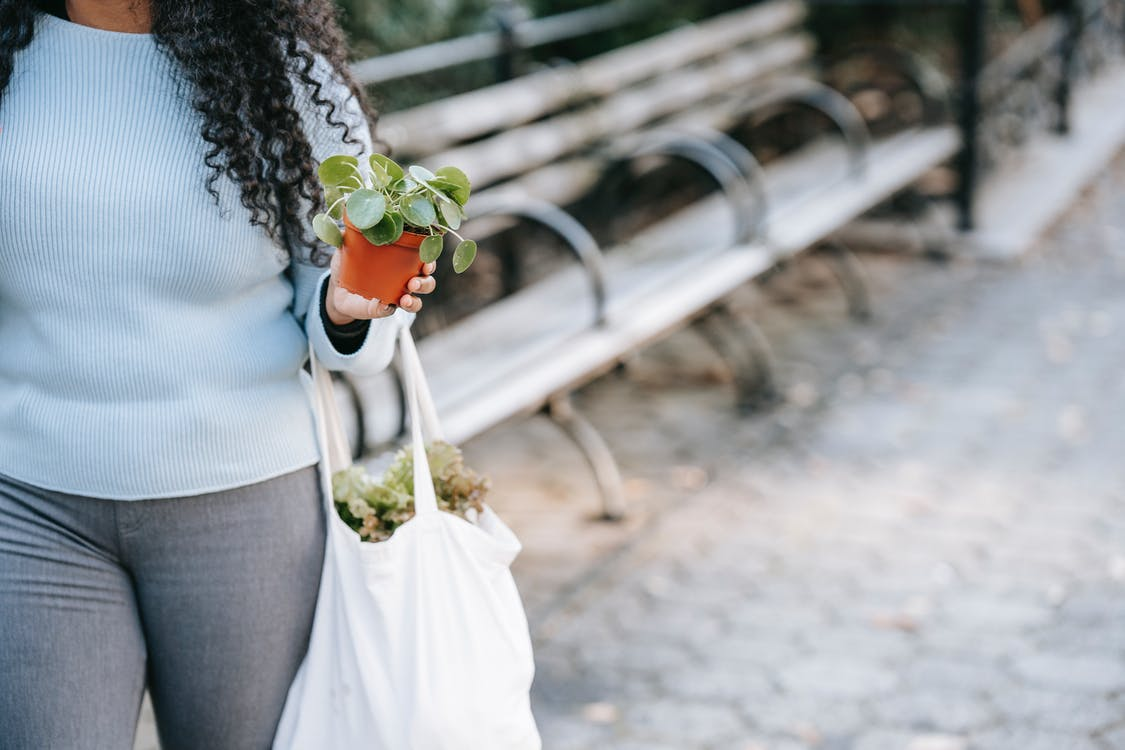 Crop anonymous African American female in casual clothes carrying lush potted plants on paved sidewalk