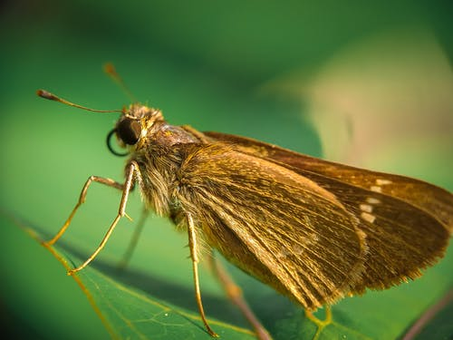 Close Up Shot of an Insect